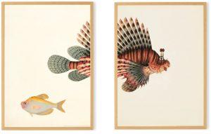 Fisch Bild