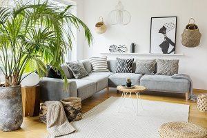Sofa und Palme