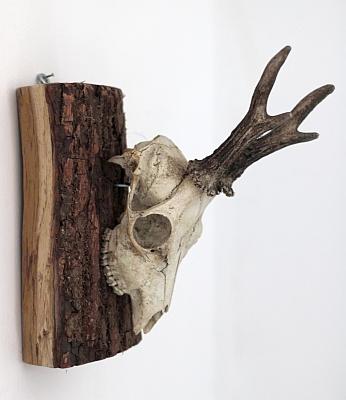 Wanddeko Rehgeweih Holz selbst gemacht